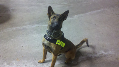 K9 Kali | Peru Police Department, Illinois