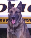 K9 Max | Miami Gardens Police Department, Florida