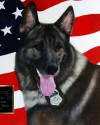 K9 Maros | United States Department of Agriculture - Forest Service Law Enforcement and Investigations, U.S. Government