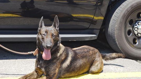 K9 Tanja | Walker County Sheriff's Office, Georgia
