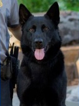 K9 Kye | Oklahoma City Police Department, Oklahoma