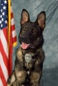 K9 Beny | Montville Police Department, Ohio