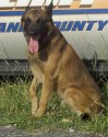 K9 Mako | Cleveland County Sheriff's Office, North Carolina