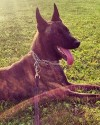 K9 Pepper | Wise County Sheriff's Office, Texas