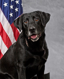 K9 Barney | Tacoma Police Department, Washington