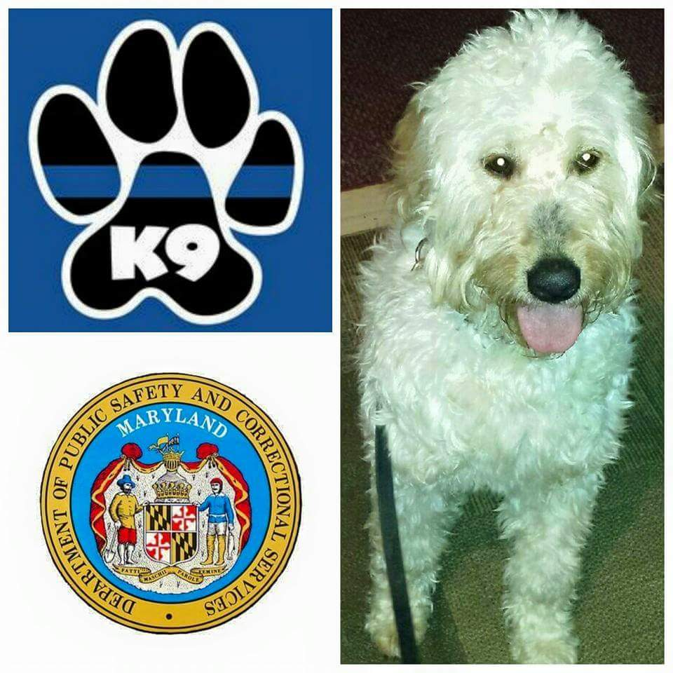 K9 Bella | Maryland Division of Correction, Maryland