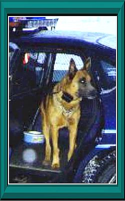 K9 Rik | Bonneville County Sheriff's Office, Idaho