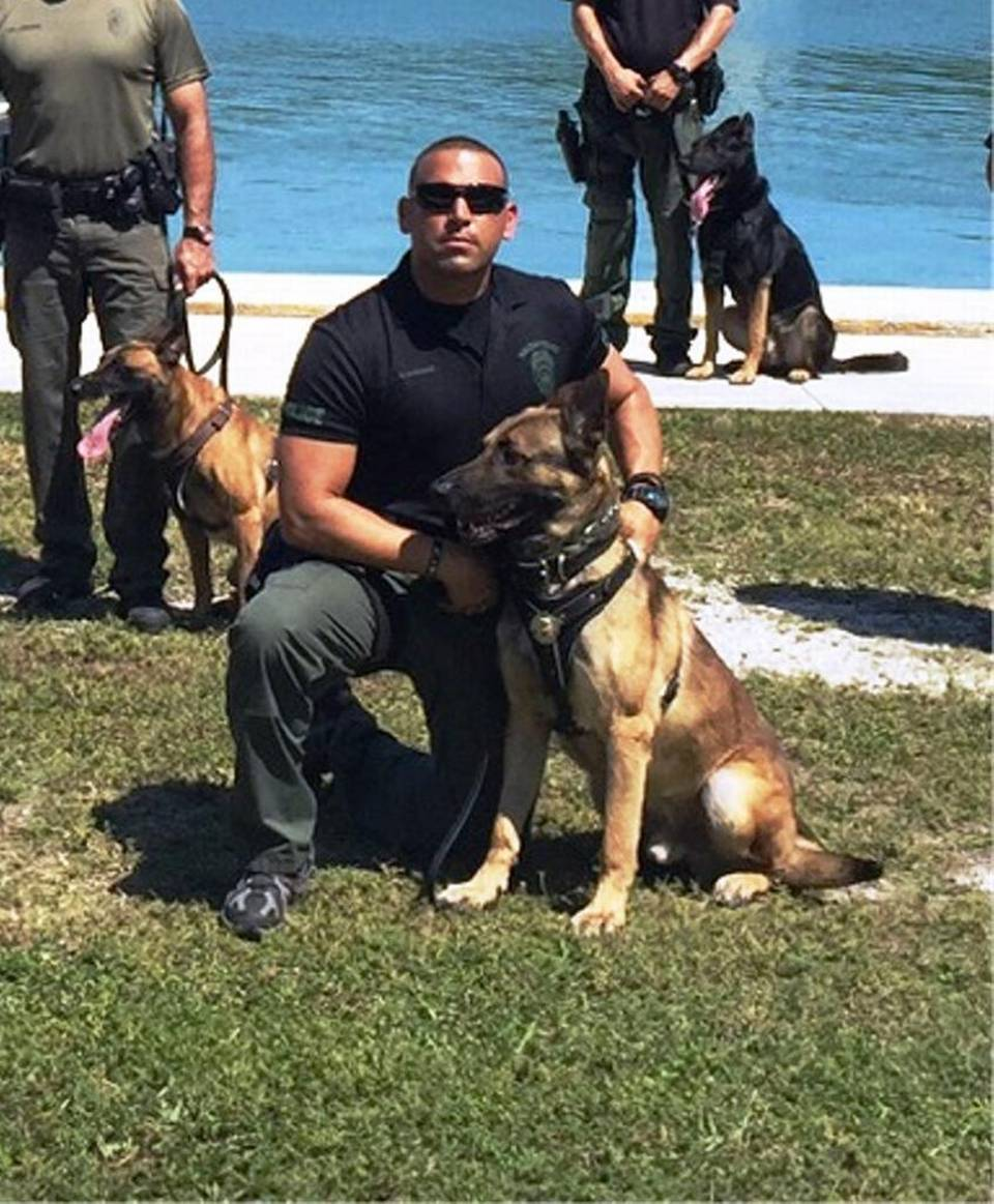 K9 Hector | Hialeah Police Department, Florida