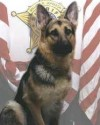 K9 Cero | Ashtabula County Sheriff's Department, Ohio