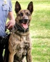 K9 Dutch | Minneapolis Police Department, Minnesota