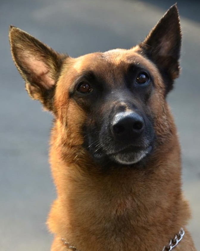 K9 Jag | Twin Rivers Unified School District Police Department, California
