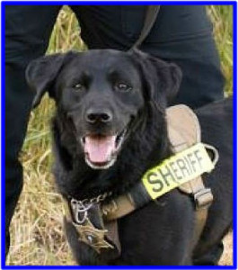 K9 Reefer | Chelan County Sheriff's Office, Washington