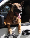 K9 Nicky | Las Vegas Metropolitan Police Department, Nevada