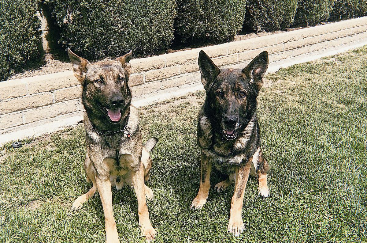 K9 Bruno | Anaheim Police Department, California