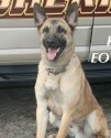 K9 Tyson | Fountain County Sheriff's Office, Indiana