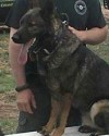 K9 Bak | Stephens County Sheriff's Office, Oklahoma
