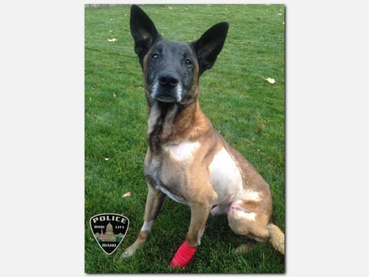 K9 Jardo | Boise Police Department, Idaho