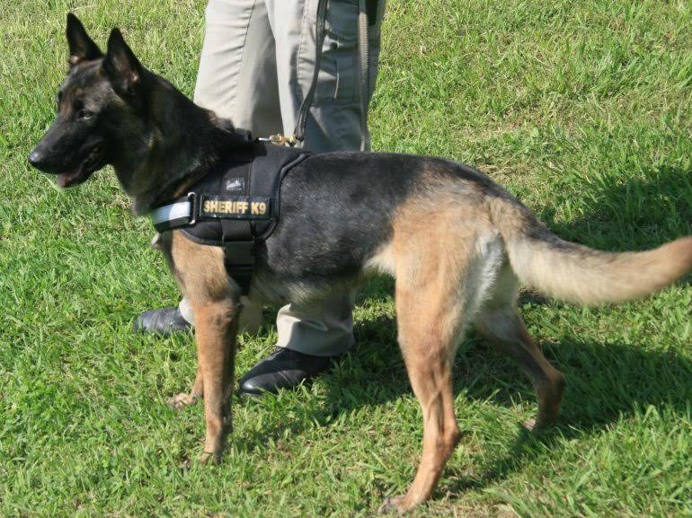 K9 Lina | Madison County Sheriff's Office, Arkansas