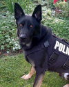 K9 Ranger | Forest Lake Police Department, Minnesota