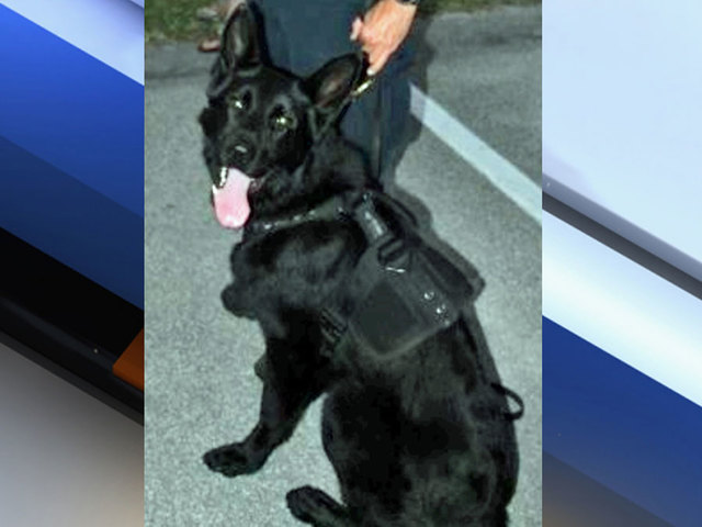 K9 Diesel | Sebastian Police Department, Florida