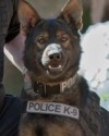 K9 Argo | Normandy Police Department, Missouri
