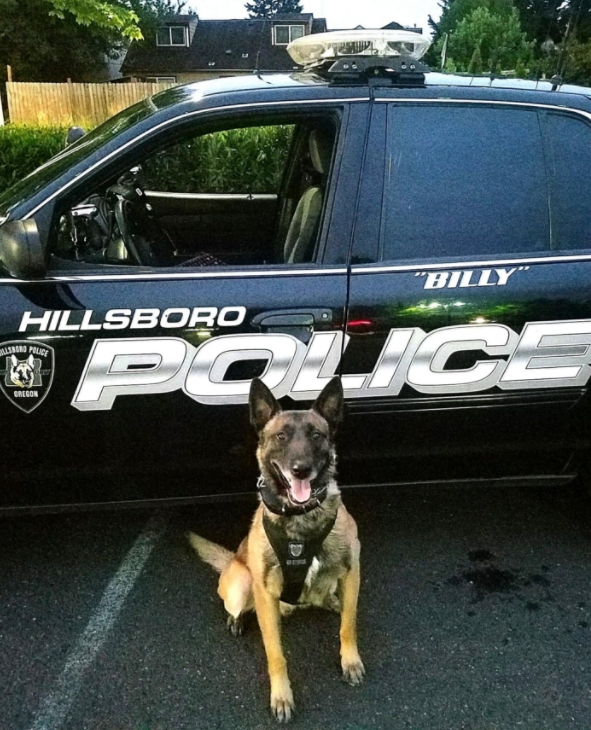 K9 Billy | Hillsboro Police Department, Oregon