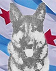 K9 Max II | Chicago Police Department, Illinois