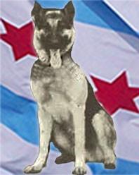 K9 Duke   Chicago Police Department, Illinois