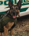 K9 Dino | Green Township Police Department, Ohio
