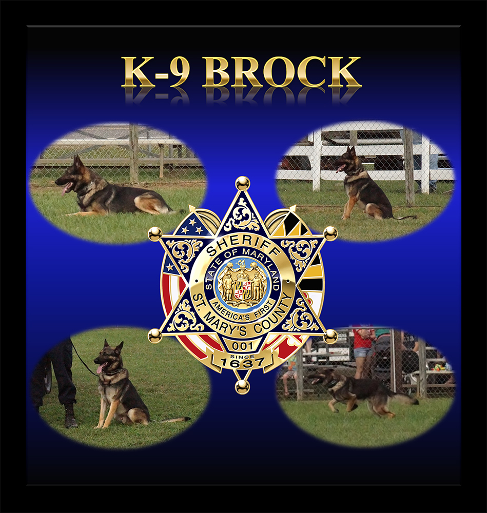 K9 Brock | St. Mary's County Sheriff's Office, Maryland