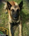 K9 Rony | Houston Police Department, Texas