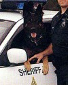 K9 Wolf | Escambia County Sheriff's Office, Florida