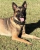 K9 Bane | Phoenix Police Department, Arizona