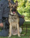 K9 Midas | Hancock County Sheriff's Office, West Virginia