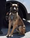 K9 Benzi | Columbus Division of Police, Ohio