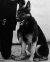 K9 Derrek | Evansville Police Department, Indiana
