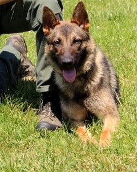 K9 Doby | Fairfax County Police Department, Virginia