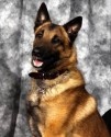 K9 Max | Durham County Sheriff's Office, North Carolina