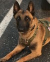 K9 Assuan | Marion Police Department, Indiana