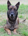 K9 Jake | Alabama Department of Corrections, Alabama