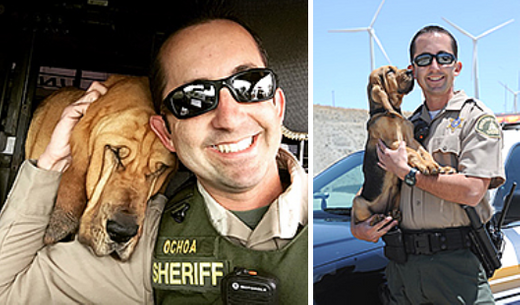 K9 Windy | Riverside County Sheriff's Department, California