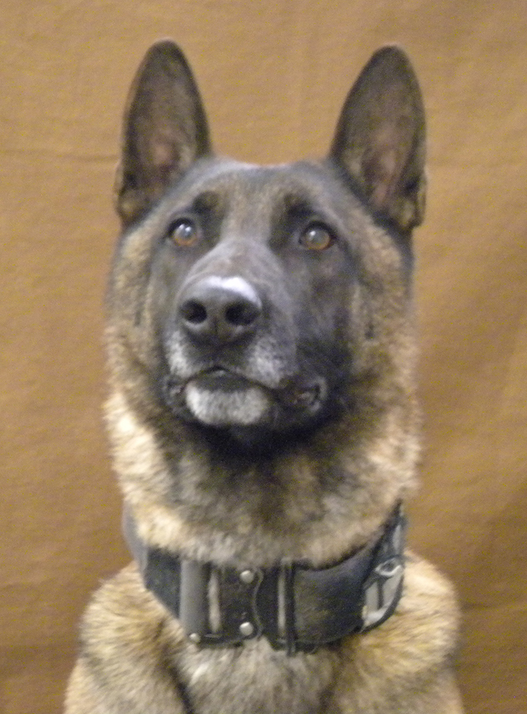 K9 Rocco | Vernal Police Department, Utah