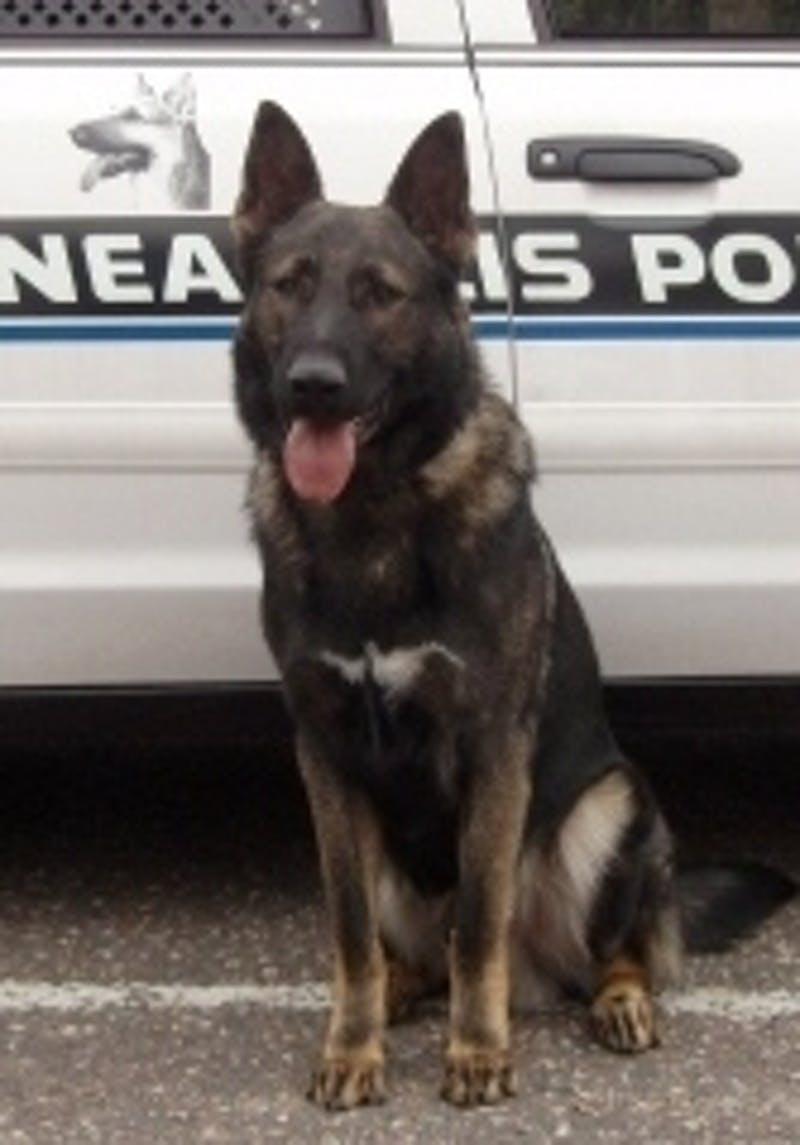 K9 Chase | Minneapolis Police Department, Minnesota