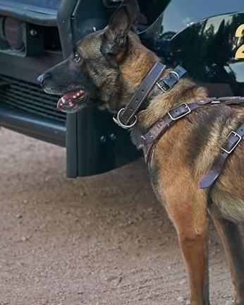 K9 Koki | El Mirage Police Department, Arizona