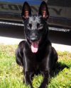 K9 Niki | Boyle County Sheriff's Office, Kentucky