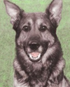 K9 Ferro | Pierce County Sheriff's Department, Washington