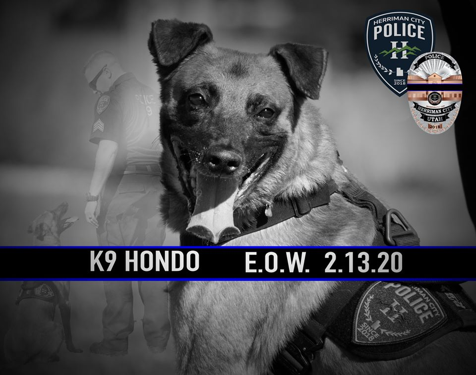 K9 Hondo | Herriman City Police Department, Utah
