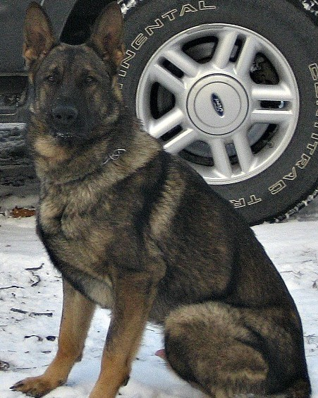 K9 Bobby | Geneseo Police Department, Illinois