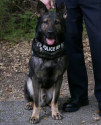 K9 Atlas | Scotts Valley Police Department, California