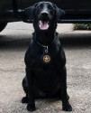 K9 Blue | South Carolina Department of Natural Resources, South Carolina